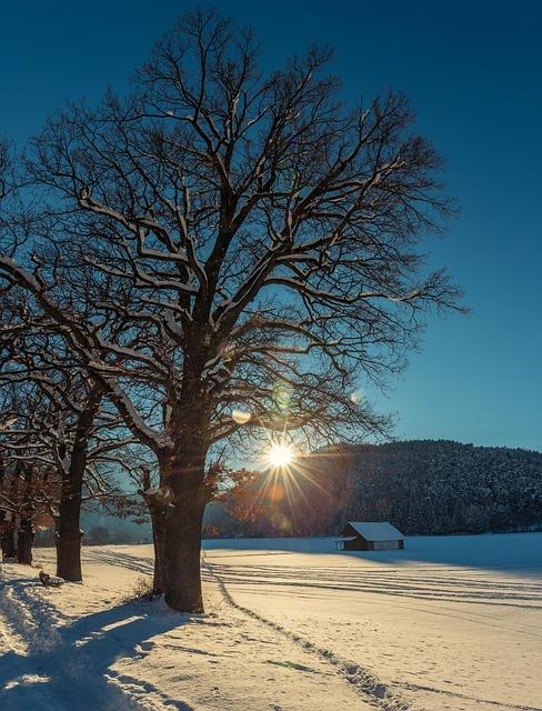 Tree, Nature, Landscape, Wood, Winter, Sun, Sky, Snow