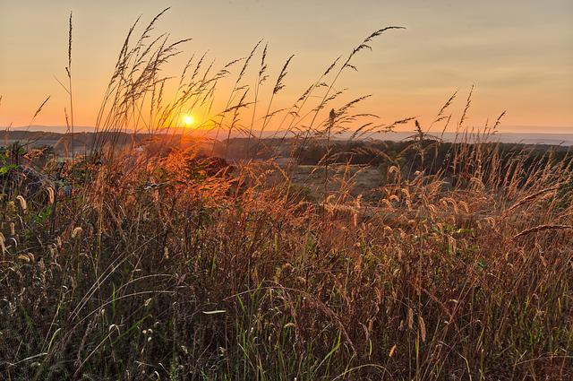 Sunset, Nature, Sky, Dawn, Landscape, Dusk, Sun, Grass