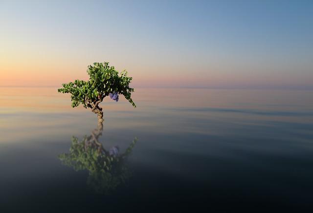 Nature, Tree, Water, Sea, Sky, Beauty, Landscape