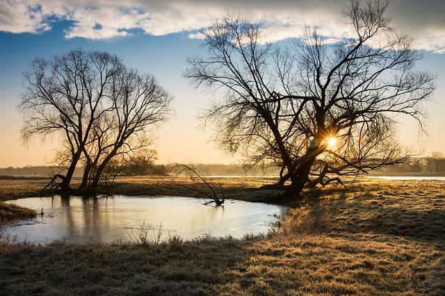 Nature, Tree, Landscape, Waters, Dawn