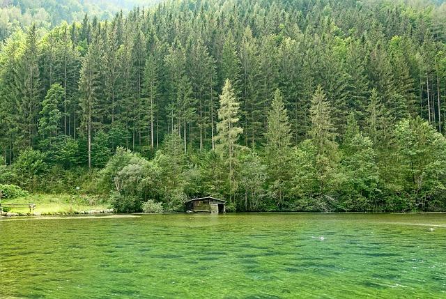 Nature, Wood, Tree, Forest, Pond, Landscape, Summer