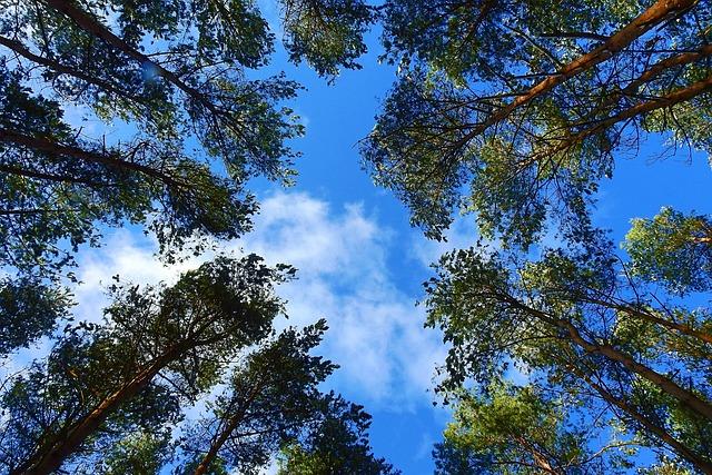 Nature, Tree, Landscape, Sky