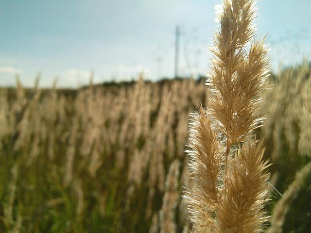 Plants, Nature, Field, Landscape, No One, Wheat, Rural