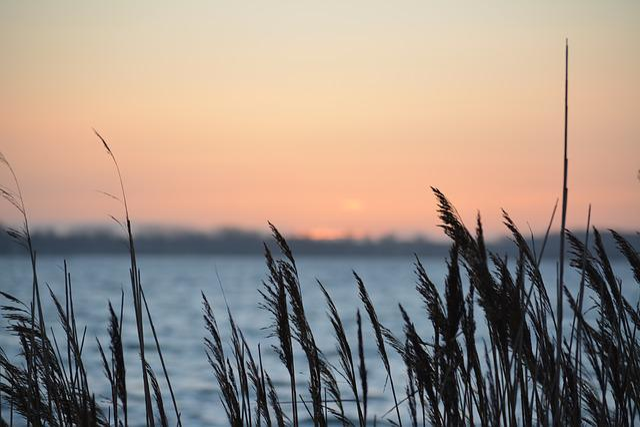 Reed, Sunset, North Sea, Fehmarn, Sea, Landscape