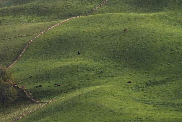 Free Photo Cowboy Cow Artificial Cattle Sculpture Plastic