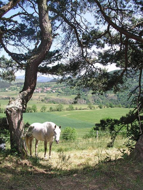 Pine, Horse, Loire, Auvergne, Landscape, Animals