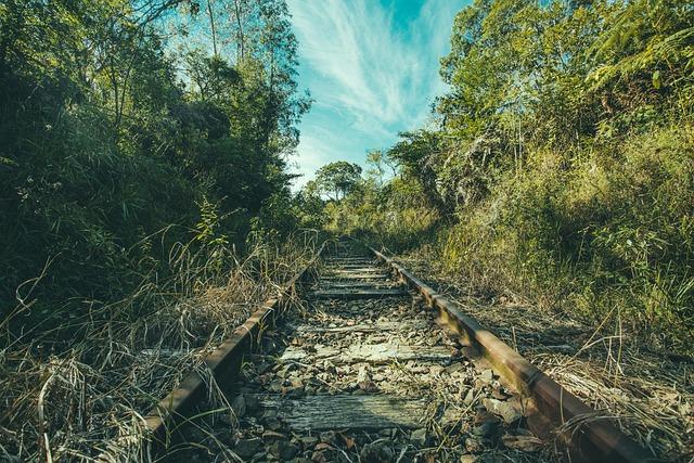 Tree, Forest, Rainforest, Nature, Landscape, Travel
