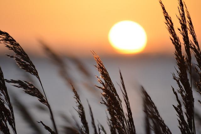 Reed, Sea, Sunset, North Sea, Fehmarn, Landscape