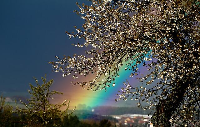 Nature, Landscape, Background, Season, Rainbow