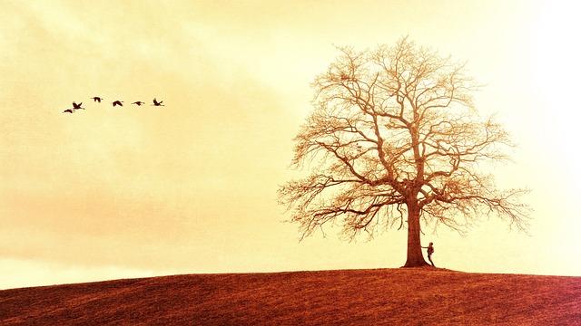 Tree, Landscape, Nature, Silhouette, Birds, Wanderer