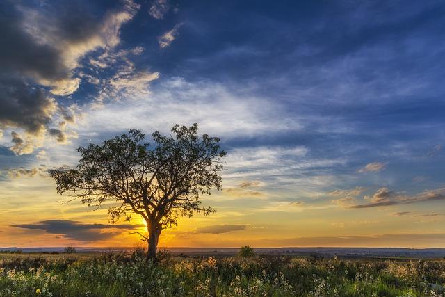 Sunset, Horizon, Cloud Landscape, Sky Sun, Landscape