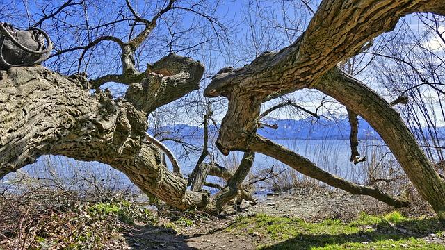 Tree, Nature, Wood, Landscape, Branch, Sky, Season