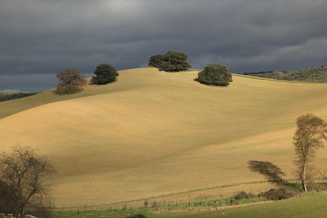 Spain, Hills, Landscape, Tree