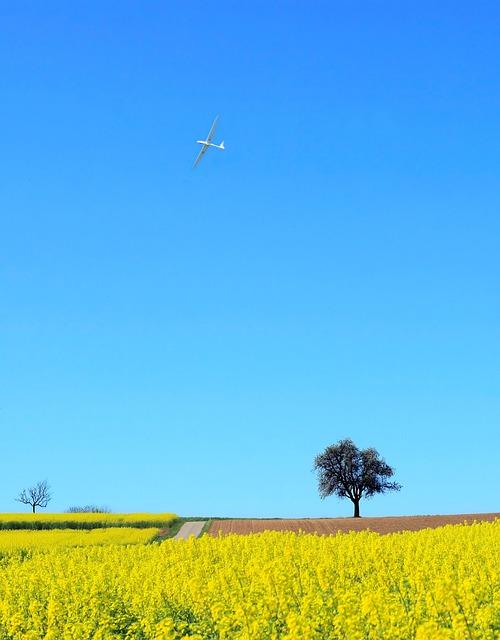 Landscape, Field Of Rapeseeds, Nature, Field, Spring