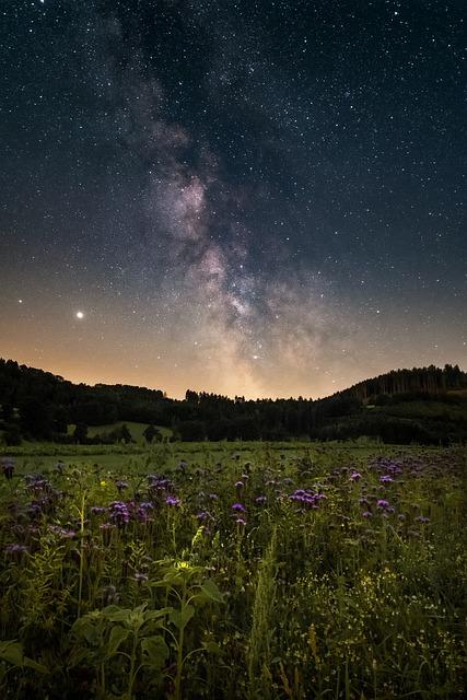Starry Sky, Flower Meadow, Night, Milky Way, Landscape