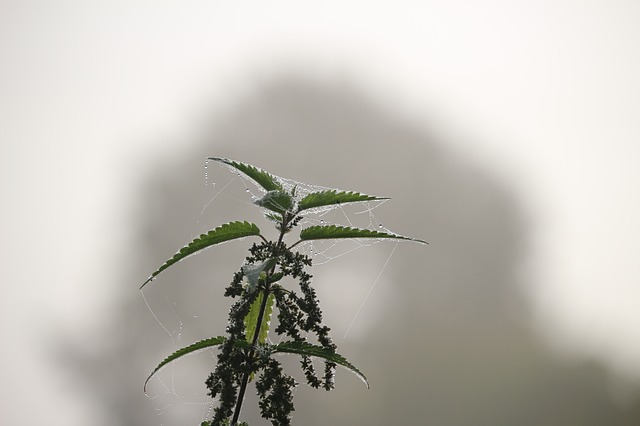 Autumn, Fog, Stinging Nettle, Nettle, Nature, Landscape