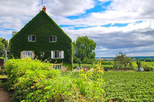 House, Home, Ivy, Vine, Garden, Landscape, Summer