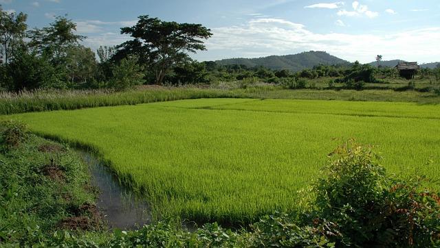 Landscape, Thailand, Rice, The Fields, Summer, Spring