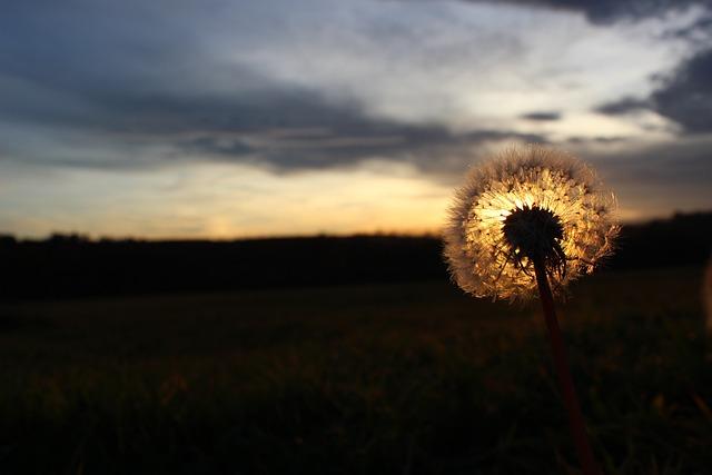 Dandelion, Sun, Sunset, Landscape, Nature, Autumn