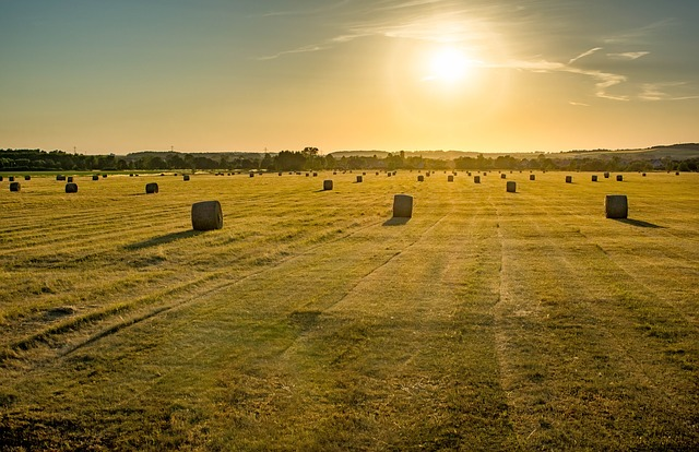 Field, Farm, Landscape, Nature, Outdoors, Sunset, Day S
