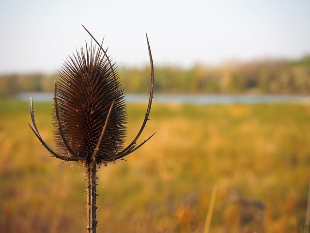 Nature, Summer, Landscape, Thistle, Steppe