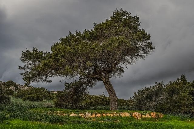 Tree, Meadow, Landscape, Nature, Green, Field, Storm