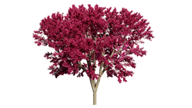 Tree, Nature, Isolated, Landscape, Spring, Leaf