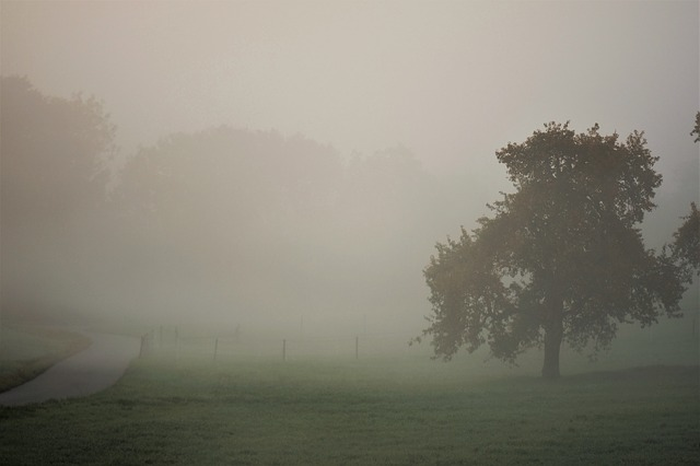 Autumn, Landscape, Fog, Fall Color, Nature, Tree