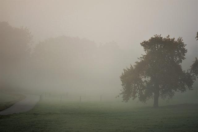 Autumn, Landscape, Fog, Fall Color, Nature, Tree