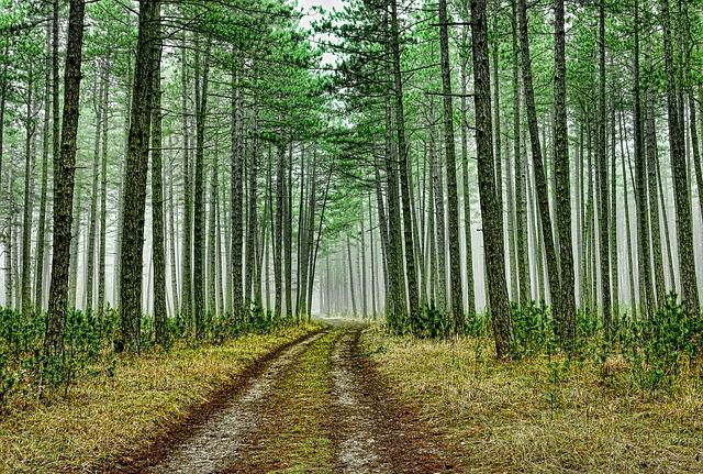 Wood, Nature, Landscape, Transport, Traffic, Tree
