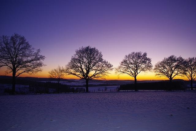 Winter, Landscape, Snow, Trees, Sky, Sunset, Wintry