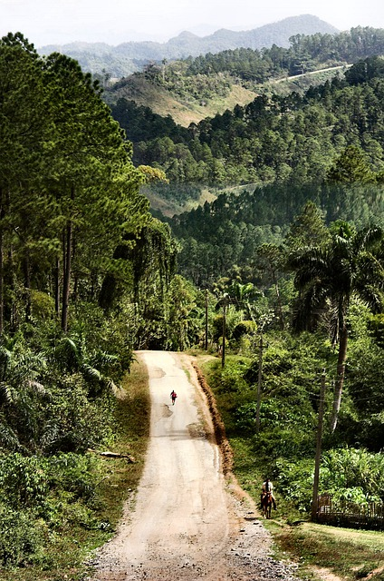 Forest, Road, Landscape, Nature, Cuba, Trinidad