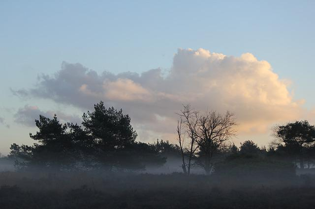 Forest, Clouds, Veluwe, Landscape
