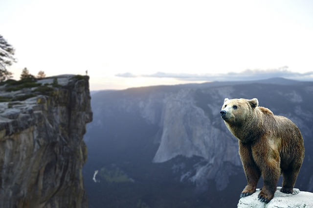 Bear, Mountain, Wait, Landscape, Nature, Sky, Adventure