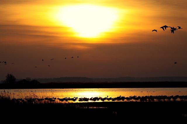 Sun, Sunset, Landscape, Water