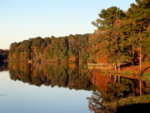 Lake, Water, Tree, Landscape, Scenery, Nature, Fall