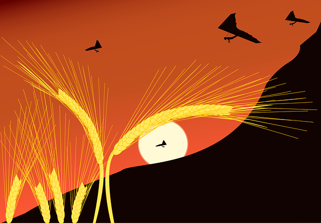 Landscape, Flying, Hang Glider, Sun, Wheat, Corn