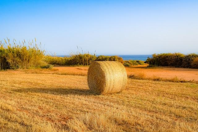 Agriculture, Field, Rural, Landscape, Wheat, Barley