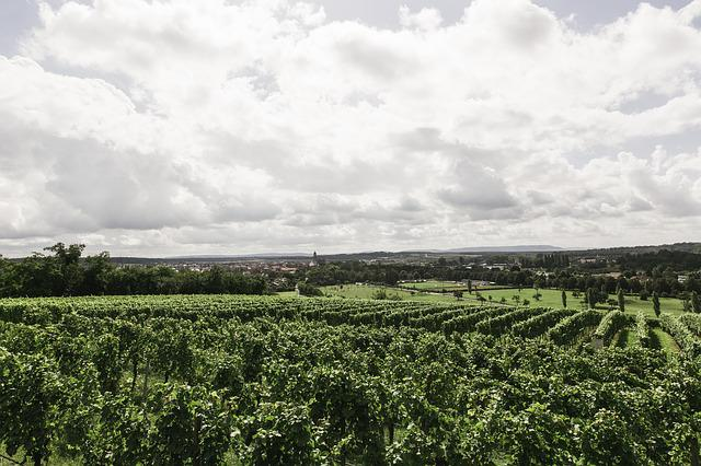Wine, Vineyard, Nature, Vines, Landscape, Winegrowing