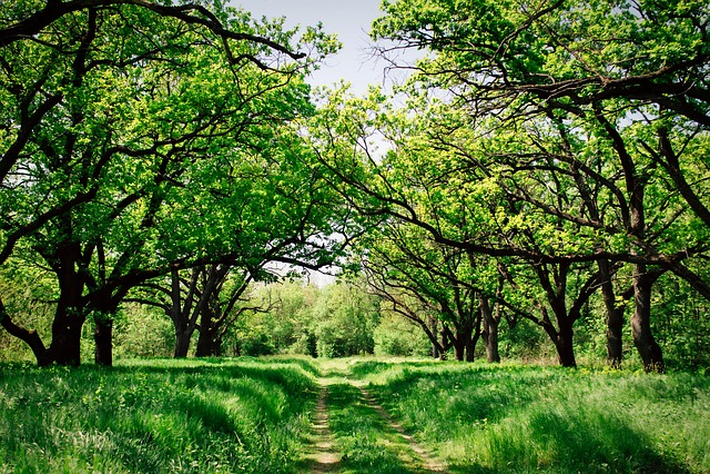 Ukraine, Forest, Trees, Woods, Landscape, Summer, Path