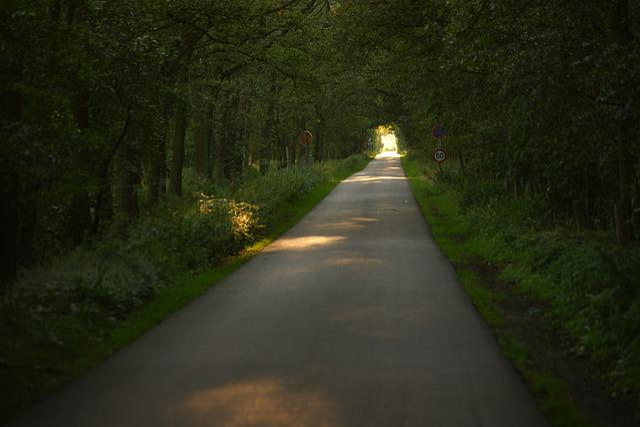 Road, Guidance, Tree, Landscape, Nature, Lane, Light