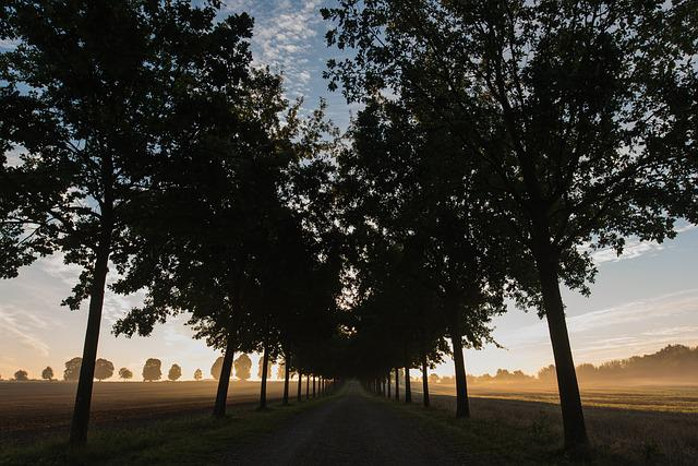 Lane, Sunrise, Trees