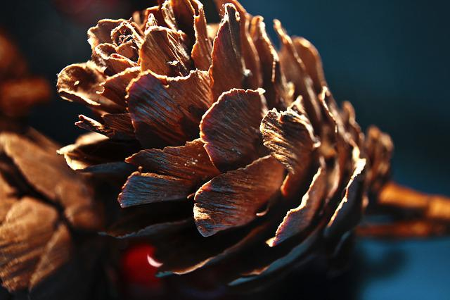 Tap, Pine Cones, Larch Cones, Brown, Wood, Conifer