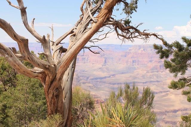 Large Canyon, Tree, Desert