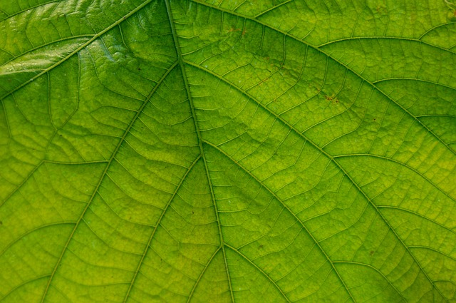 Leaf, Great, Nature, Large Leaves, Close, Plant, Veins