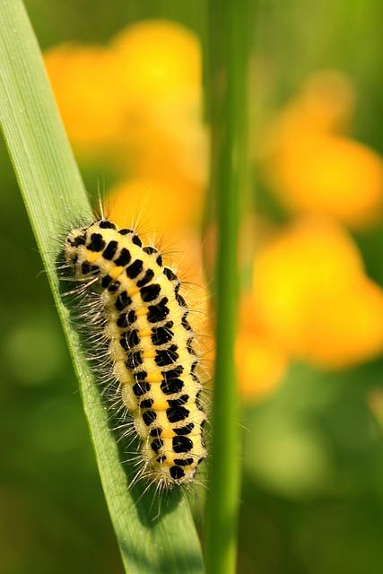 Caterpillar, Larva, Leaf, Insect, Nature, Close Up