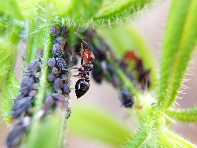 Ant, Larvae, Animals, Nature