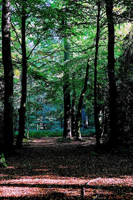 Forest, Late Summer, Nature, Urach, Leaves, Mood, Green
