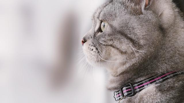 Cat Mia, Pet, Gel Reviews, Cat, Lateral Face