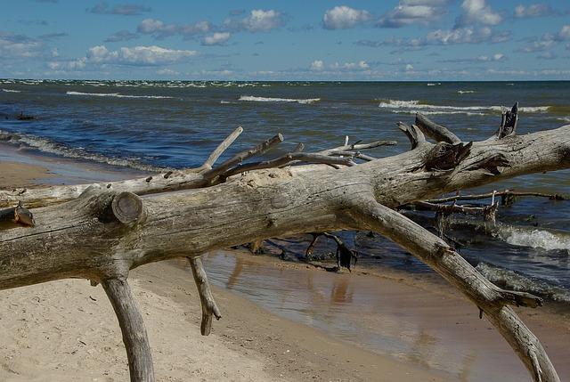 Baltic Sea, Latvia, Driftwood, Wild Nature